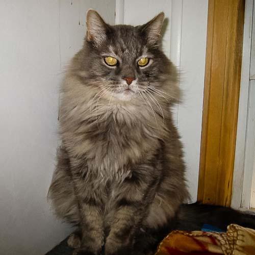 Kato Boarding Happy Cat Retreat Fort Collins