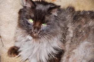 Happy Cat Sealcat Guest