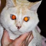 Reilly - A Special Cat