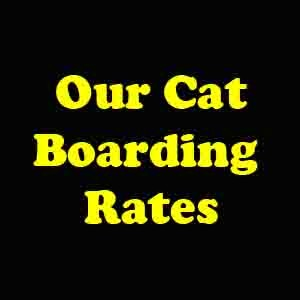 OurCatBoardingRates